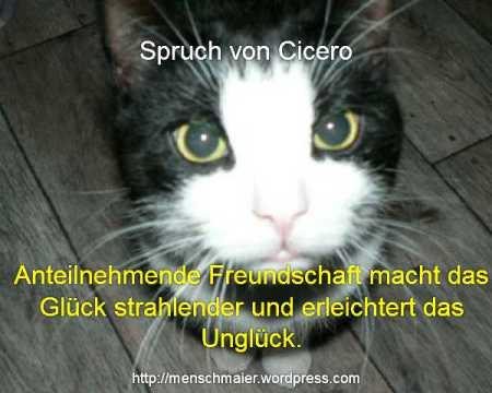 Cicero Spruch